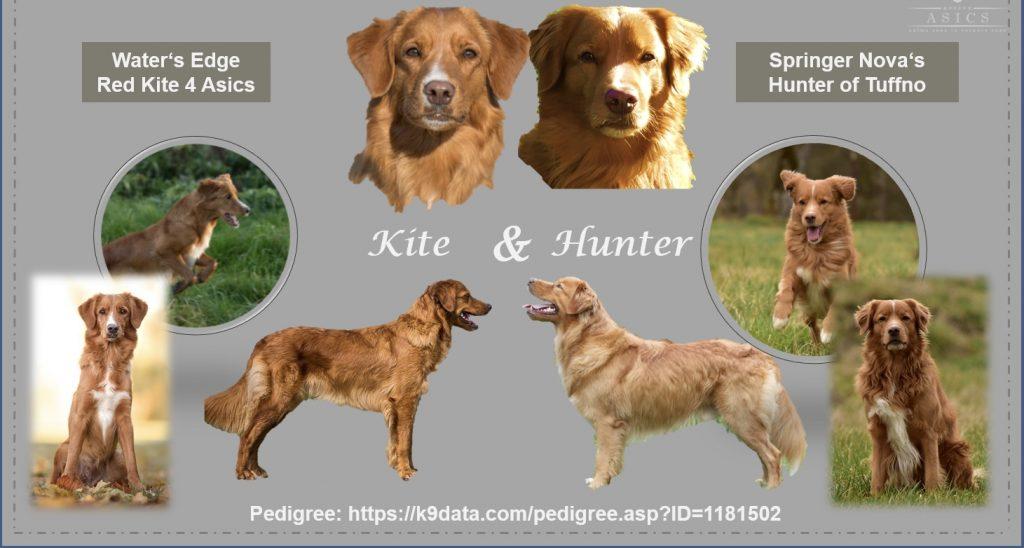 View Wurfplanung Kite & Hunter