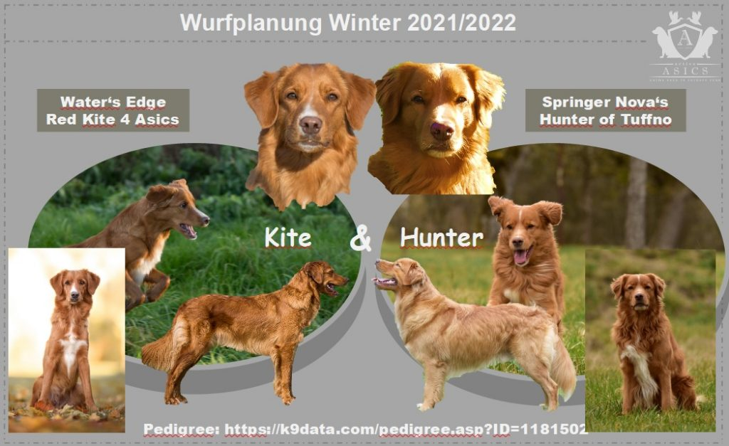 View Wurfplanung Winter 2021/2022: Kite & Hunter